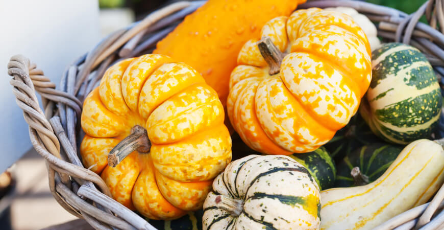 Close up of colorful pumpkins and squashes in a wicker basket.